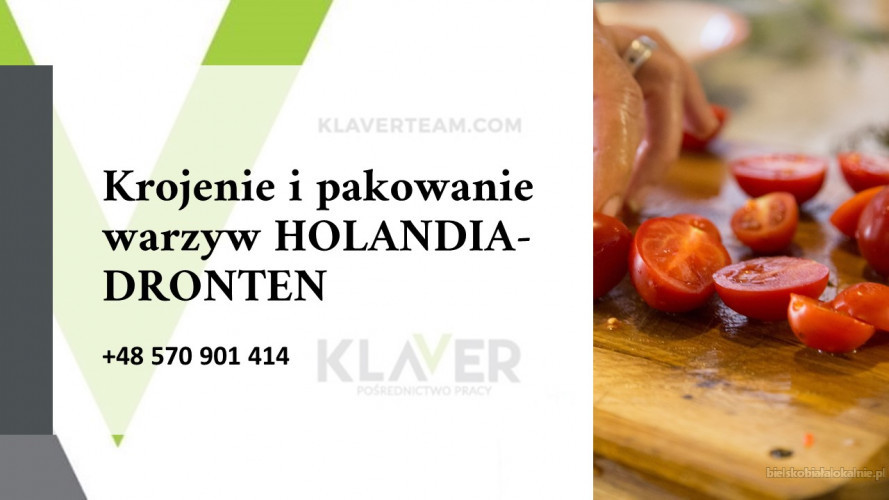 SAŁATKI obiadowe produkcja, krojenie i pakownie warzyw  w  - Holandia